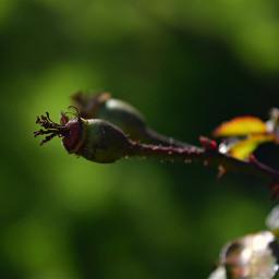freetoedit bokeh flower nature photography