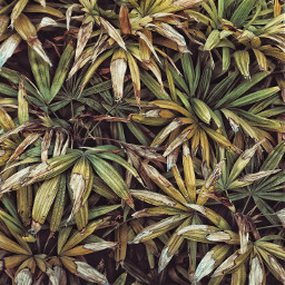 plant plants beach nature photography wppfloralcanvas freetoedit
