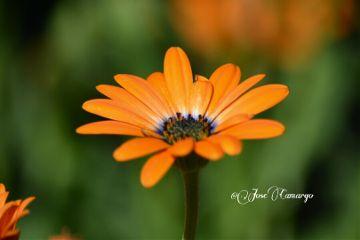 flower colorful nature nikon summer