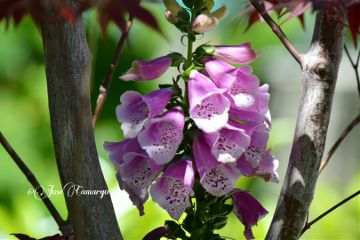 flower colorful nature photography nikon