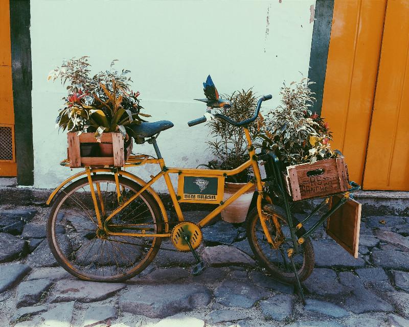 RIO DE JANEIRO!  #nature #photography #vintage #retro #travel #FreeToEdit