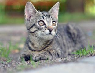 nikond90 pets animals nikon cats