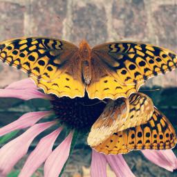 flower butterfly nature summer soft