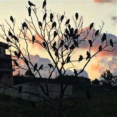 birds silhouette herd morning colors