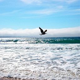 bird thesea thebeach thesky theclouds