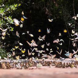 photography trip travel nature butterfly