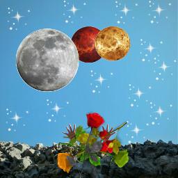 freetoedit flowerarrangement space stars