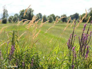 bladesofgrass nettesdailyinspiration plants