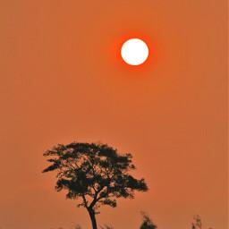 sunrise freetoedit nature photography tree