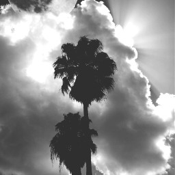 silhouetteart nettesdailyinspiration nature blackandwhite photography
