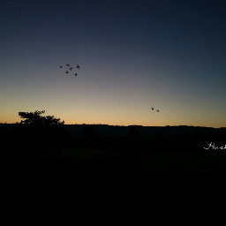 silhouetteart twilight photography