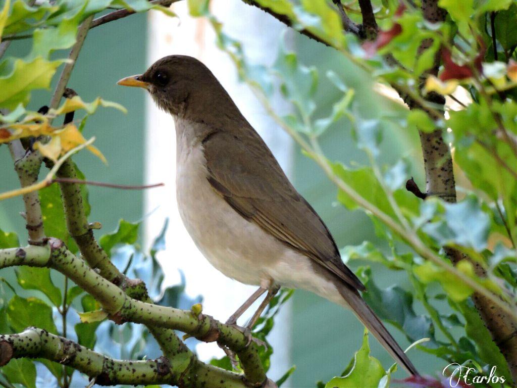 #nature  #bird