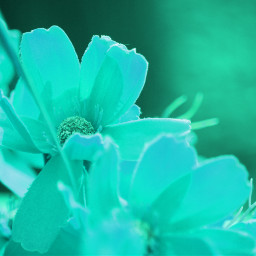 nettesdailyinspiration colorchangeup flowers nature