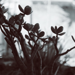 instalike baobabtree photography freetoedit