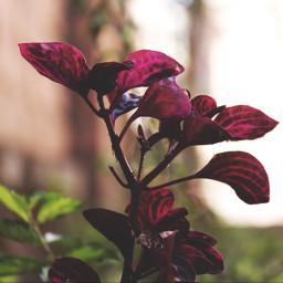 flower garden sunny nature freetoedit