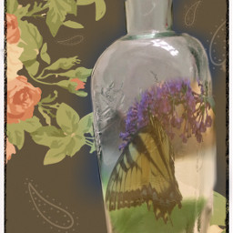 freetoedit floralprint bottle butterfly maskborder