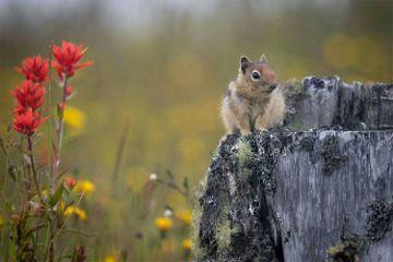 wildlife nature chipmunk