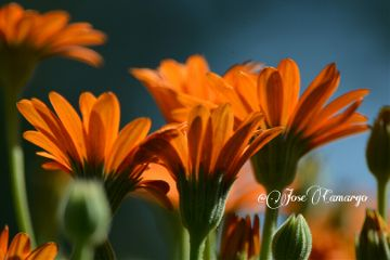 colorful flower photography nature nikon