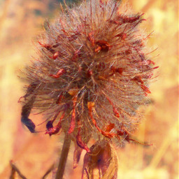 flower nature plant dryflowers photography