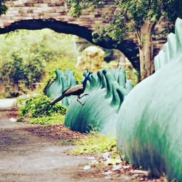 dragon signature_farm peace petsandanimals photography freetoedit