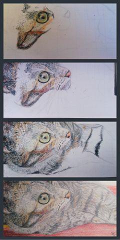 workinprogress animal drawing cat