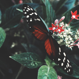nature butterfly photography 50mm
