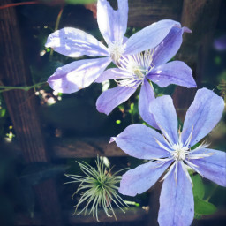 flower little cute gardenflower garden