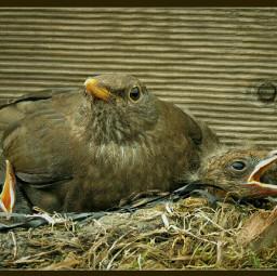 birds petsandanimals photography closeup