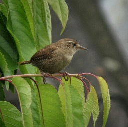 birds petsandanimals wildlife naturephotography garden