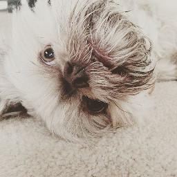 follow instagram instagramer dogs