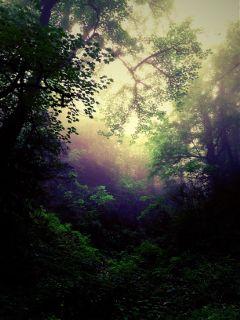 nature jungle iran photography art