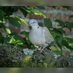squarefit summer birds naturephotography wildlife