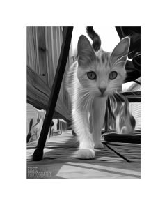 cat pets blackandwhite photography border