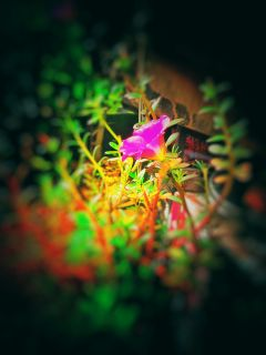 freetoedit colorsplash bokeh nature flower