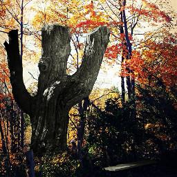 freetoedit autumn oldtree forest forestpark