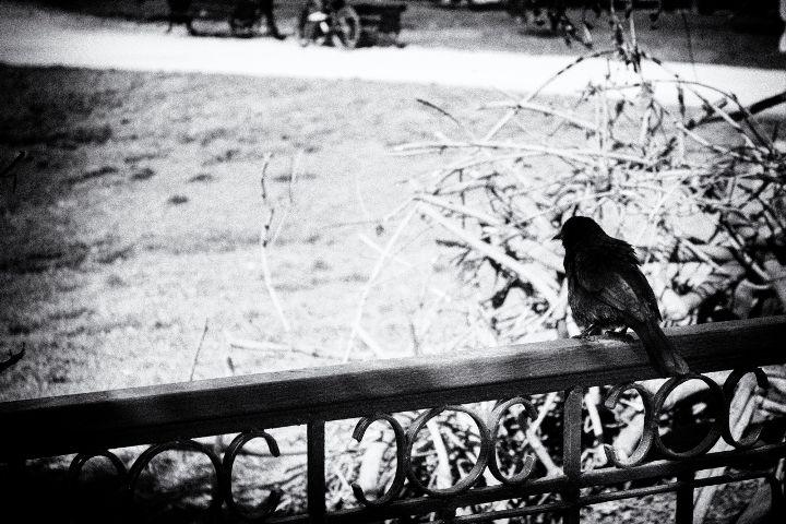 #ave,#ciudad,#blackandwhite,#black,#blancoynegro
