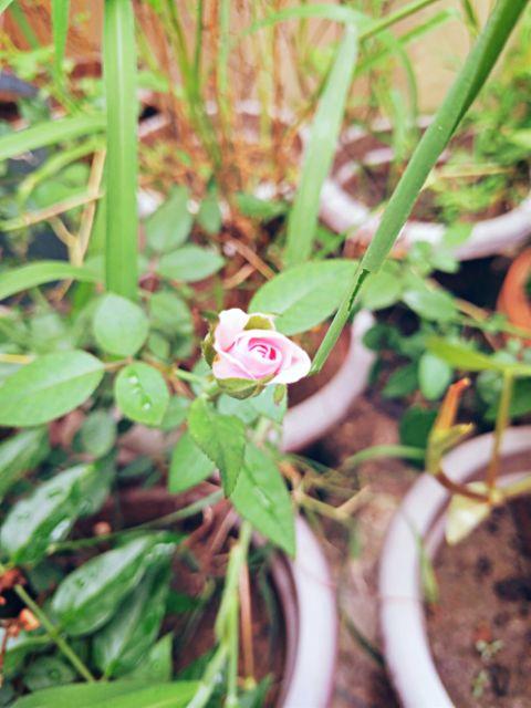#flower,#flowerpower,#flowerphotography,#flowerporn,#flowerslovers